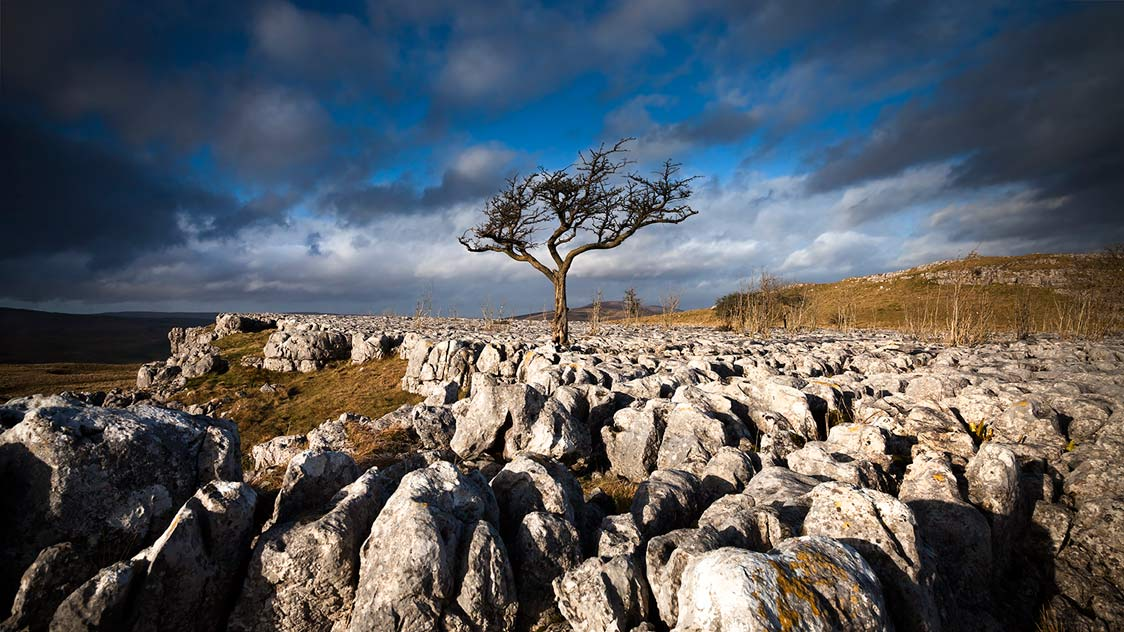 STANDING TALL - Conistone, Yorkshire