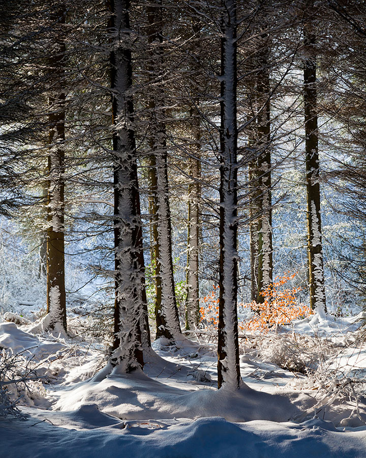 WINTER FOREST - Timble, Yorkshire